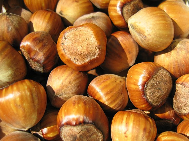 Hazelnuts are very nutritious and versatile in their culinary uses. Discover all the secrets about hazelnuts in this article.