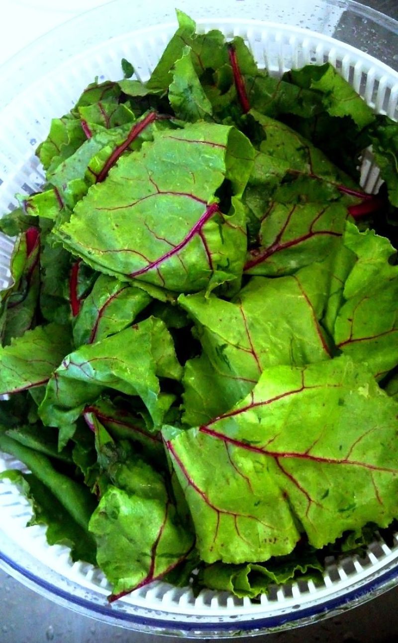 Beet tops and very nutritious and versatile for use in salads, sauces and as a vegetable