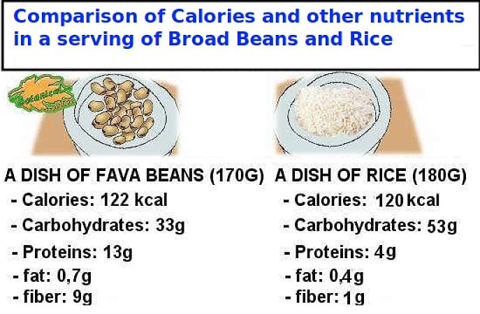 Broad beans have better nutritional values than rice, despite have similar energy rating in terms of calories. The protein content is espcially high for fava beans