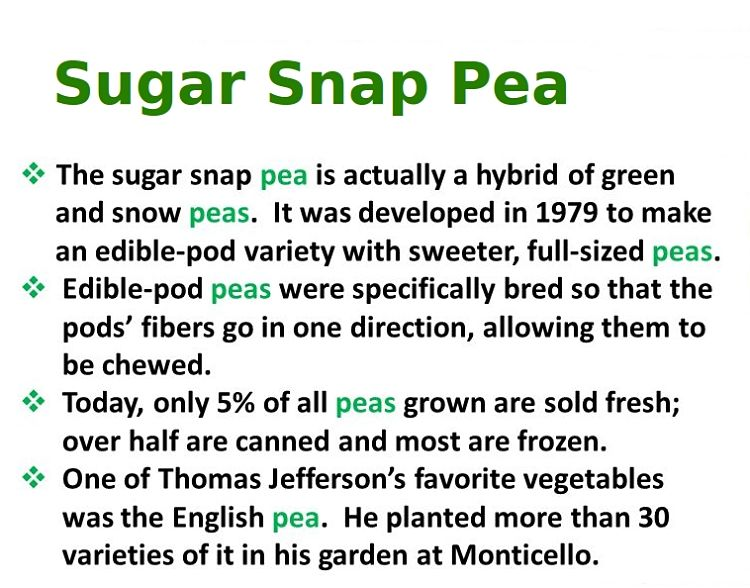 Information about the Sugar Snap Pea - a delightful hybrid with combined benefits of    edible peas and pods