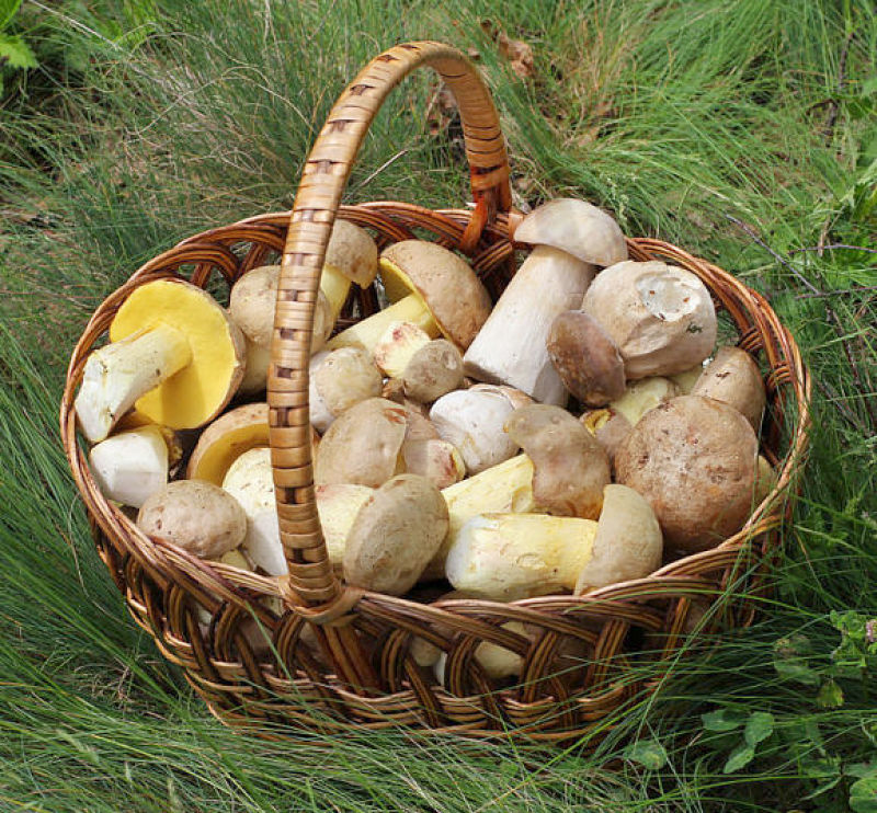 The are many varieties of edible mushrooms that have different nutrients and health benefits