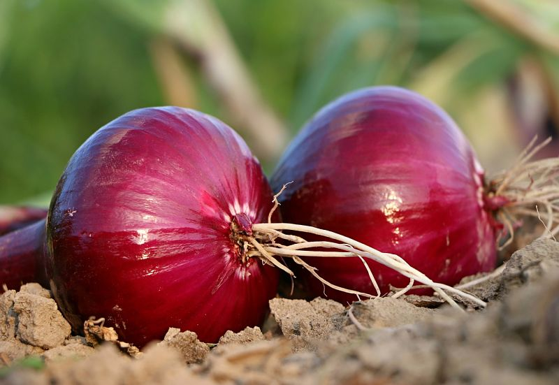 Onions can be added to curries and noodle soups to add flavor, texture and nutritional values