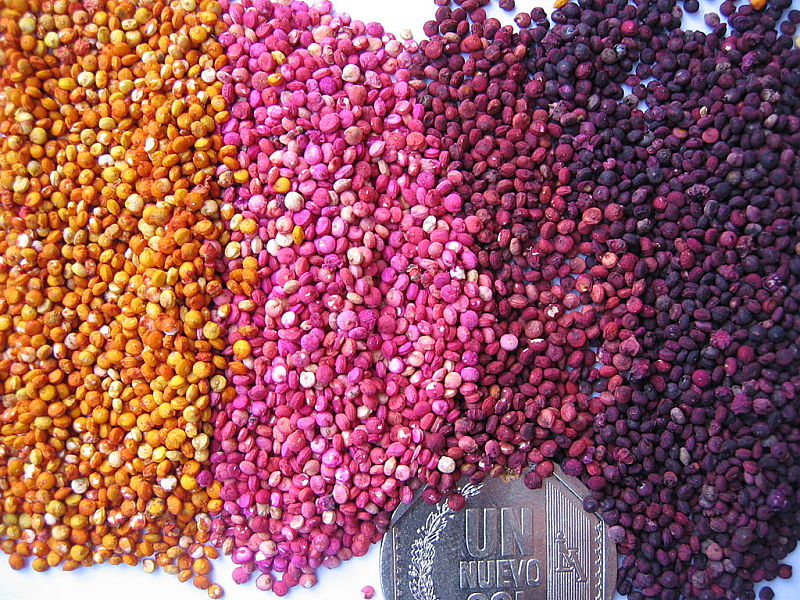Color variation in quinoa seeds