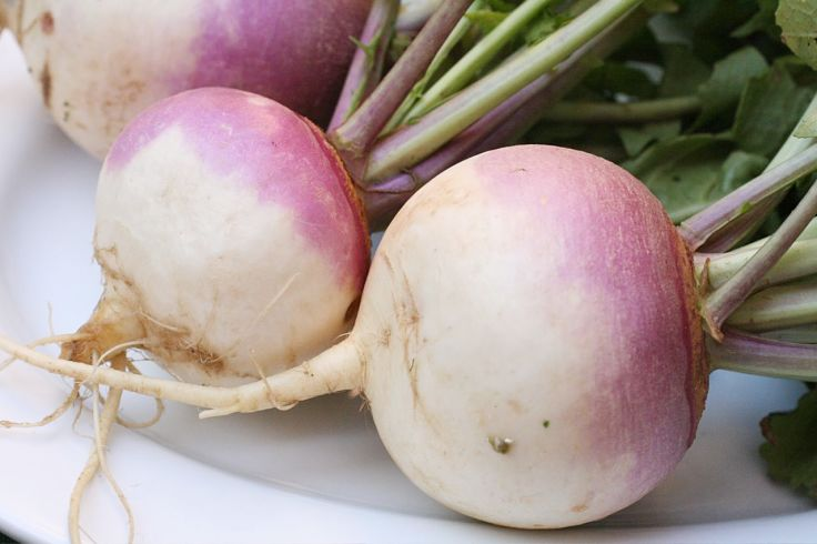 Choose bright small turnips with fresh green tops